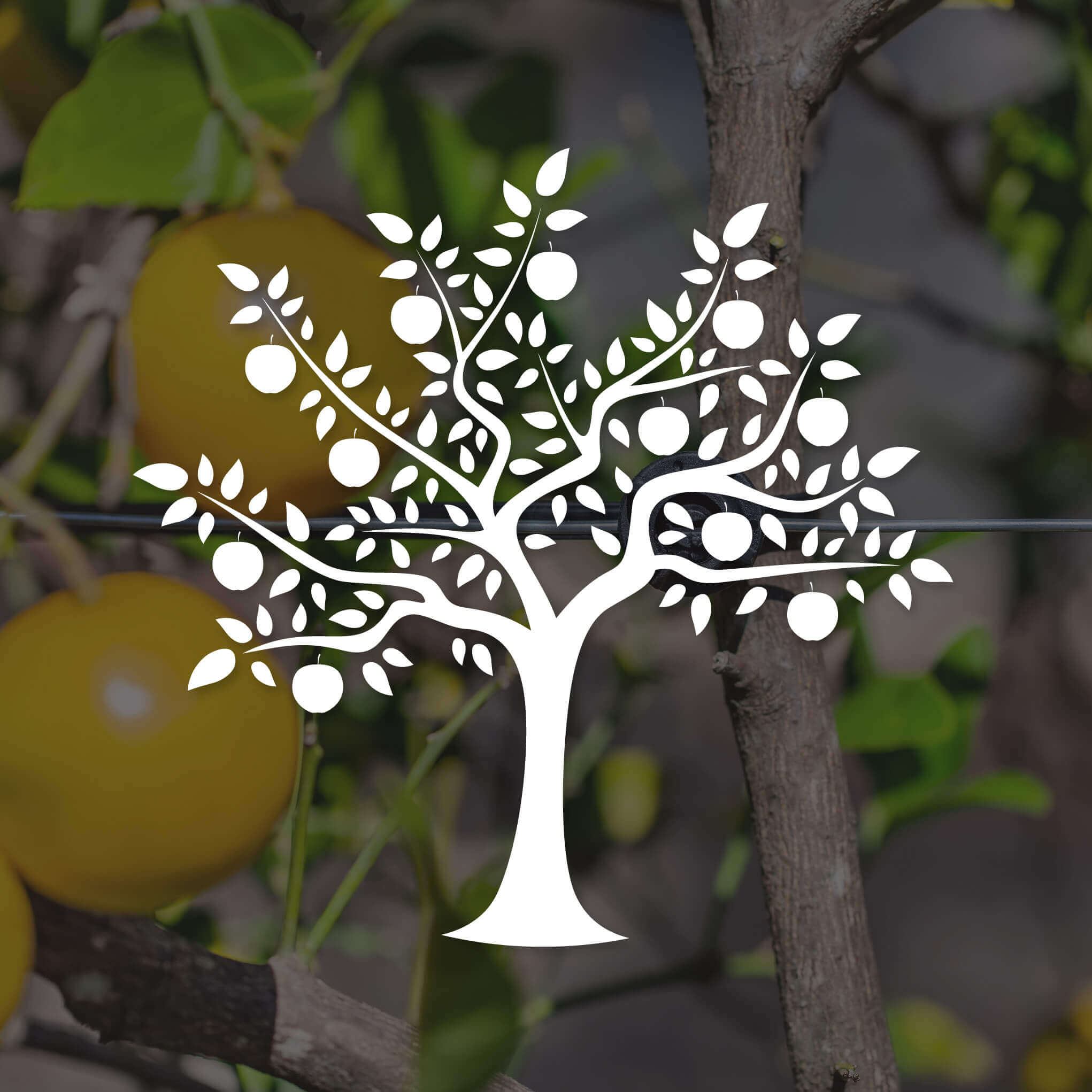 White fruit tree icon against photo of fruit trees