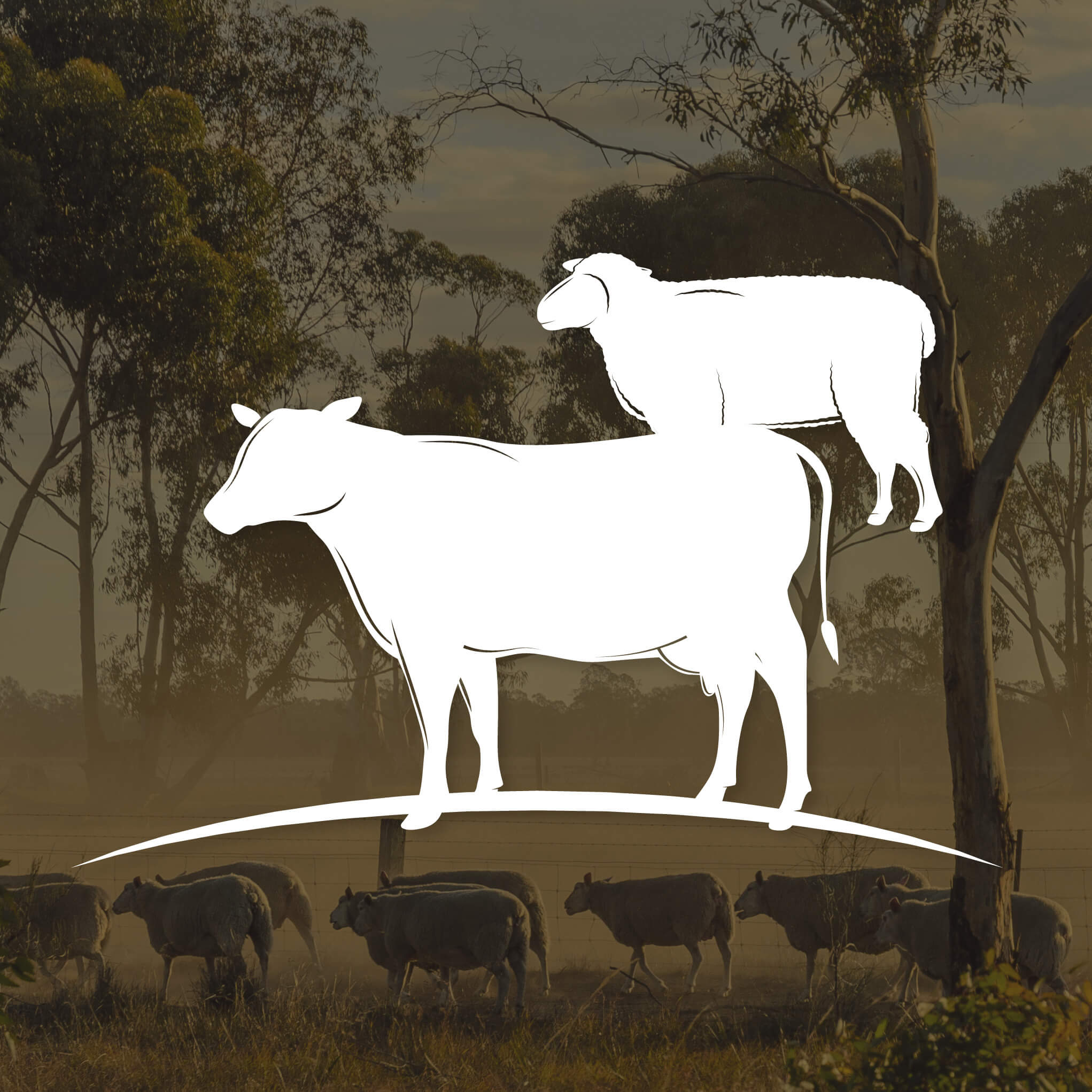 white cow and sheep icon